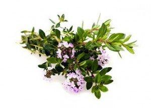 maggiorana-fiori-300x215
