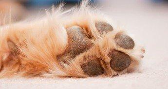 cura del piedino del cane - sotto