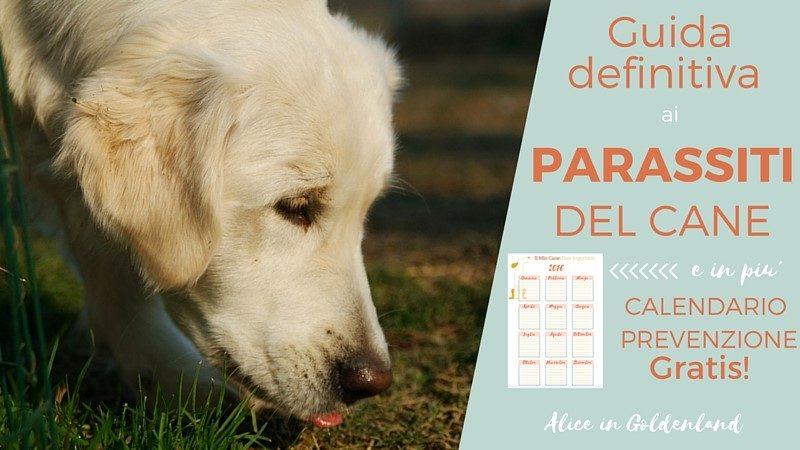 Guida Definitiva ai Parassiti del cane + Calendario Prevenzione Mese per Mese Gratis