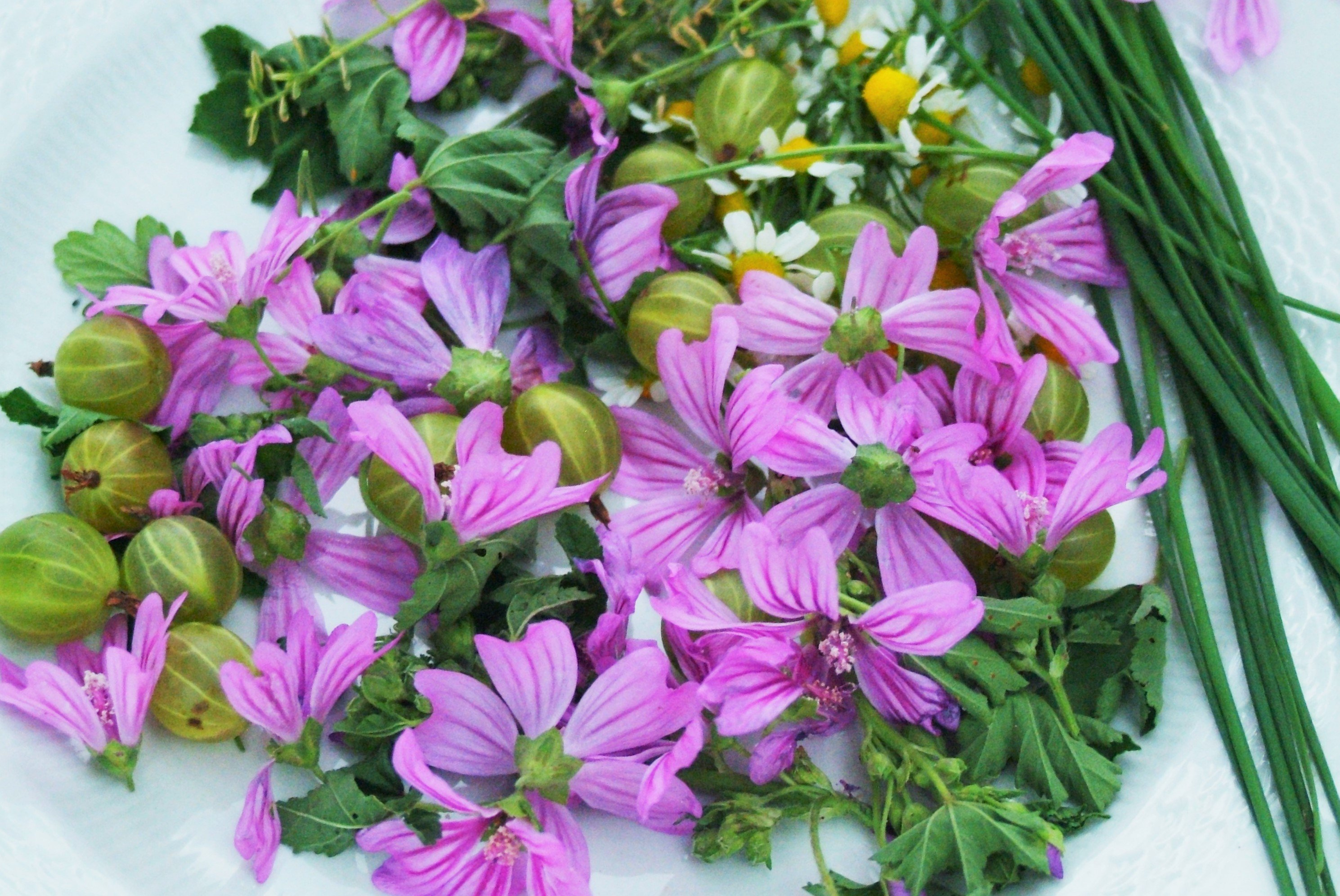 Insalata petalosa lattuga fiori di malva ciliegie uva for Tipi di fiori