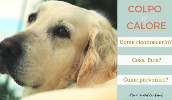Colpo di calore nel cane: come riconoscerlo, cosa fare e come prevenirlo