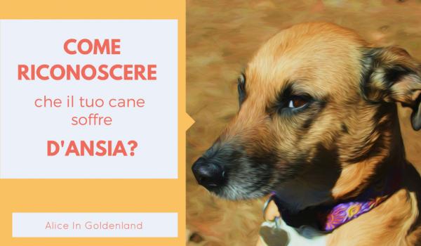 Come riconoscere se il tuo cane soffre d'ansia?