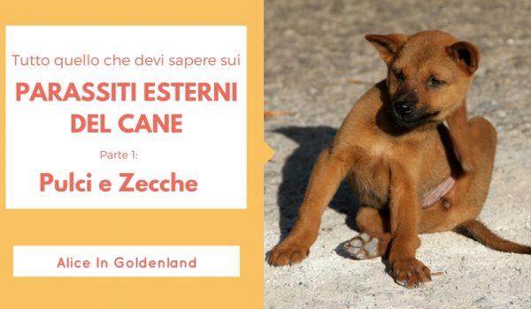 Parassiti esterni del cane: pulci e zecche
