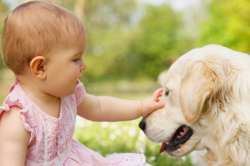 Cani e neonati: consigli per un rapporto proficuo e sereno