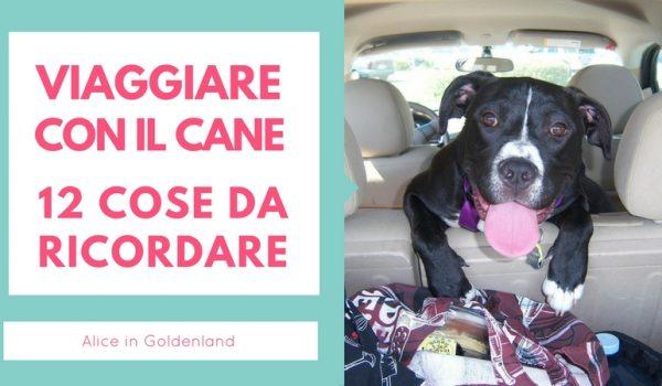 12 Cose Da Ricordare Quando Viaggi Con Il Tuo Cane